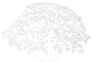An oak tree watermark